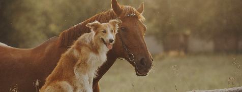 szkody wyrządzone przez psy gospodarskie